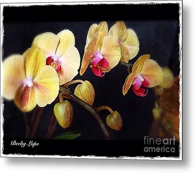 Orchids Arise Metal Print by Becky Lupe