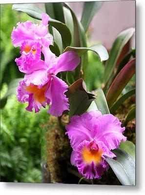 Orchids At The Washington Botanical Metal Print by Carol Kinkead