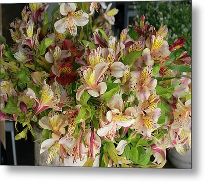 Orchids For Sale In Main Street Market Metal Print by Panoramic Images