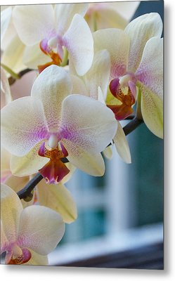 Orchids In The Morning Light Metal Print