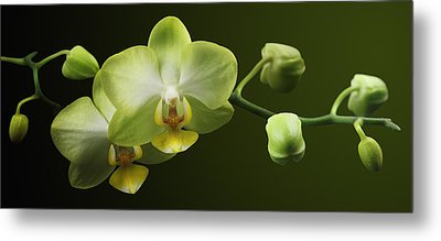 Orchids Metal Print by Marc Huebner