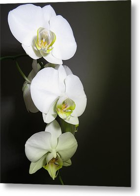 Orchids On Gray Metal Print
