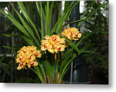 Orchids - Us Botanic Garden - 01137 Metal Print by DC Photographer