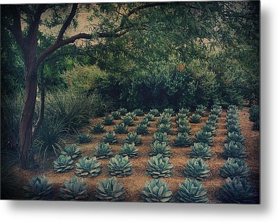 Order Metal Print by Laurie Search
