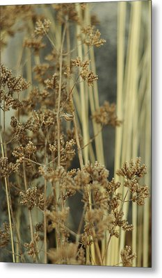 Metal Print featuring the photograph Oregano In Winter by Rebecca Sherman