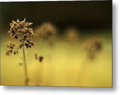 Metal Print featuring the photograph Oregano Winter Warmth by Rebecca Sherman