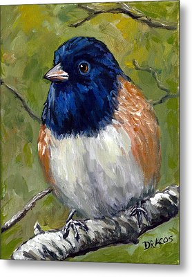 Oregon Junco In The Forest Metal Print by Dottie Dracos