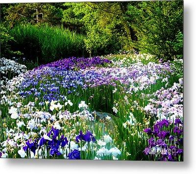 Oriental Ensata Iris Garden Metal Print
