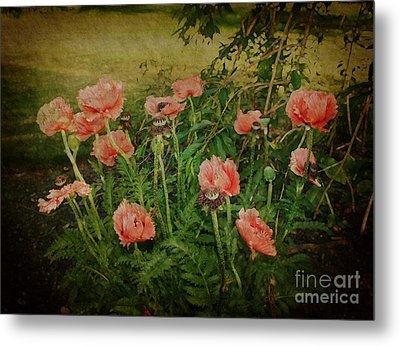 Oriental Poppies Metal Print