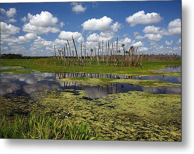 Orlando Wetlands Cloudscape 2 Metal Print by Mike Reid