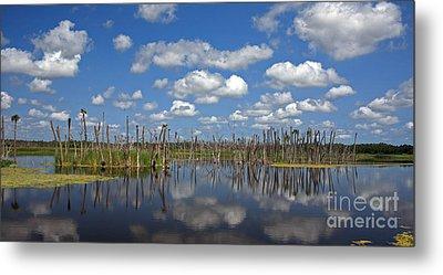 Orlando Wetlands Cloudscape 3 Metal Print by Mike Reid