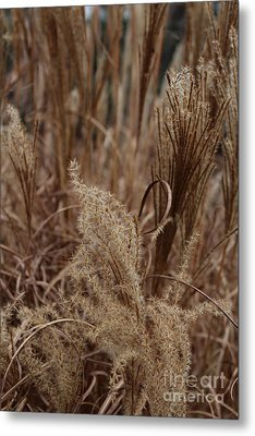 Ornamental Grass Metal Print by Arlene Carmel