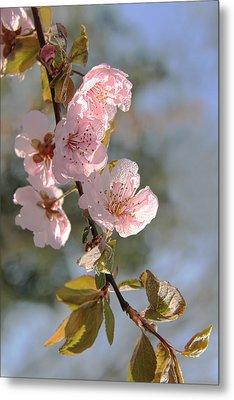 Ornamental Plum Tree Pink Flower Blossoms Metal Print by Jennie Marie Schell