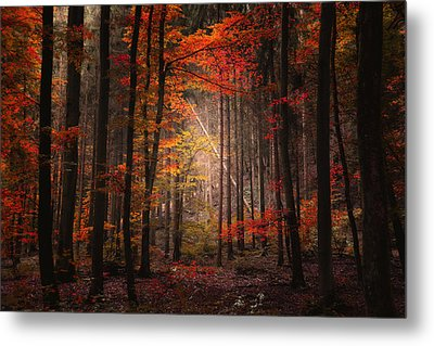 Metal Print featuring the photograph Orton Forest by Philippe Sainte-Laudy