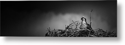 Metal Print featuring the photograph Osprey by Bradley R Youngberg