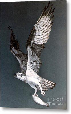 Osprey Metal Print by DiDi Higginbotham
