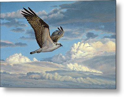 Osprey In The Clouds Metal Print by Paul Krapf