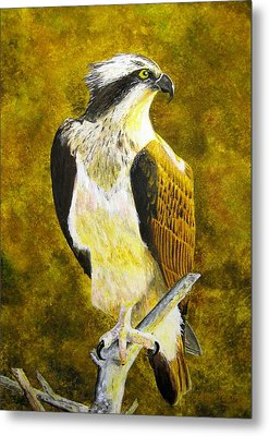 Metal Print featuring the painting Osprey Profile by Stan Tenney