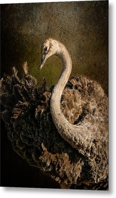 Metal Print featuring the photograph Ostrich Ballet by Mike Gaudaur