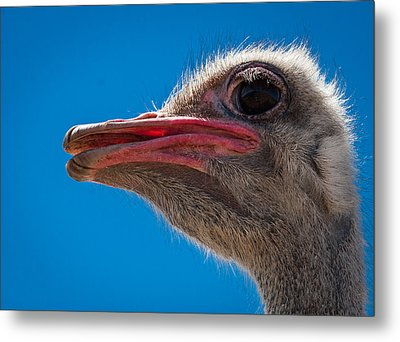 Ostrich Profile Metal Print by Jean Noren