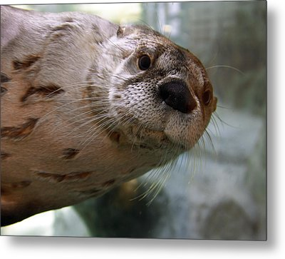 Otter Be Lookin' At You Kid Metal Print