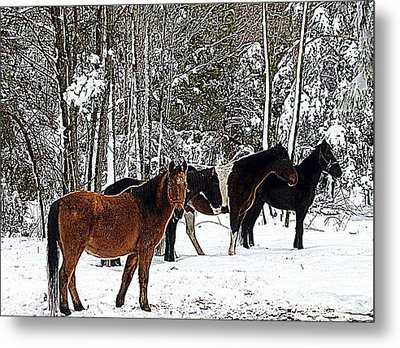 Our Horses Metal Print