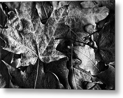 Out In The Cold Metal Print by Christi Kraft