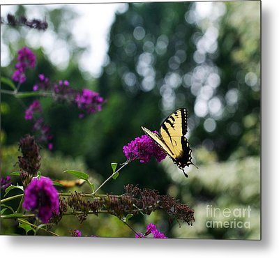 Metal Print featuring the photograph Out Of Bounds 3 by Judy Wolinsky