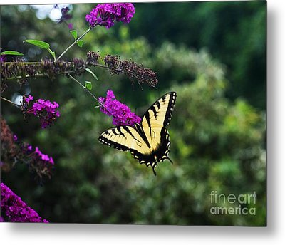 Metal Print featuring the photograph Out Of Bounds by Judy Wolinsky