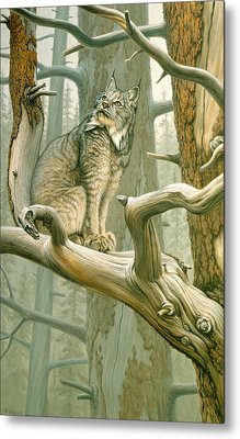 Out Of Reach - Lynx Metal Print by Paul Krapf