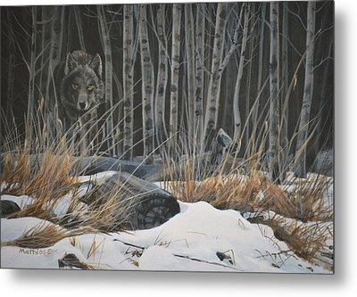 Out Of The Shadows - Wolf Metal Print