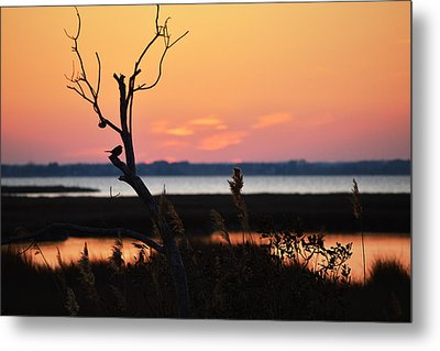 Metal Print featuring the photograph Ocean City Sunset Out On A Limb by Bill Swartwout