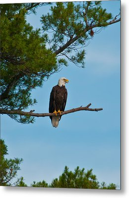 Metal Print featuring the photograph Out On A Limb by Brenda Jacobs