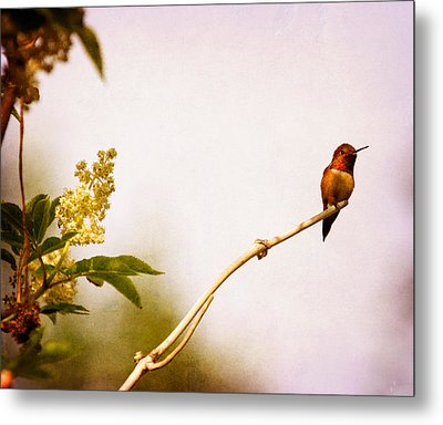 Metal Print featuring the photograph Out On A Limb by Peggy Collins