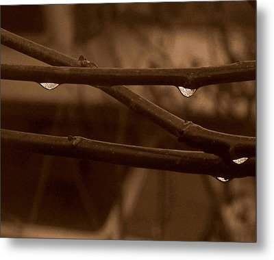 Metal Print featuring the photograph Out On A Limb by Suzy Piatt