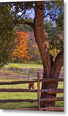 Out To Pasture Metal Print by Joann Vitali