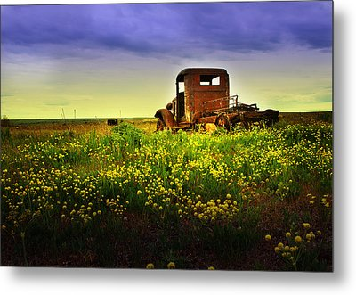 Out To Pasture Metal Print by Sonya Lang