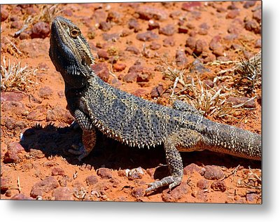 Metal Print featuring the photograph Outback Lizard by Henry Kowalski