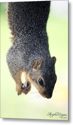 Outdoor Life - Squirrel 2 Metal Print by Angela Rogers