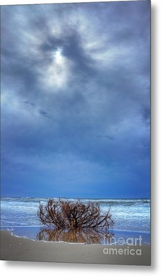 Outer Banks - Driftwood Bush On Beach In Surf I Metal Print by Dan Carmichael