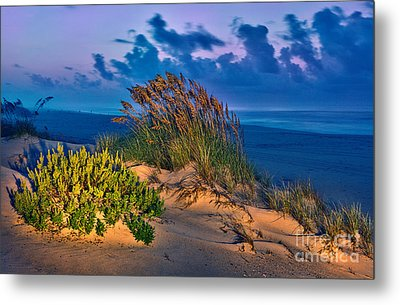 Outer Banks - Ocracoke Sand Dunes Oats Sunrise Metal Print by Dan Carmichael