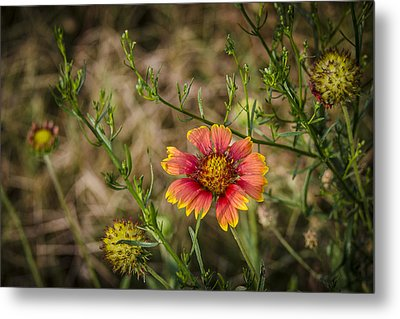 Outer Banks Wildflower Metal Print by Bradley Clay