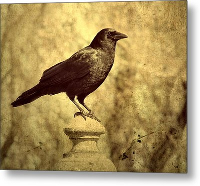 The Raven's Outlook Metal Print by Gothicrow Images