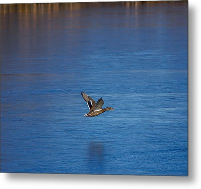 Over Frozen Pond Metal Print by Ernie Echols
