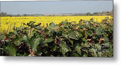 Metal Print featuring the photograph Over The Hedge by Linda Prewer