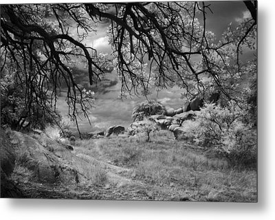 Overhanging Branches Metal Print by Michael McGowan