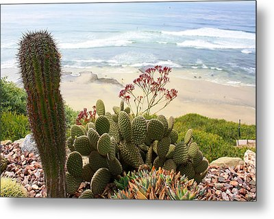 Overlooking San Elijo Beach Metal Print