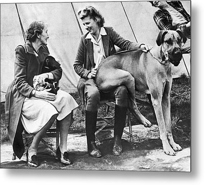 Oversized Lap Dog Metal Print by Underwood Archives