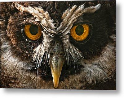 Owl Metal Print by Chris Boulton