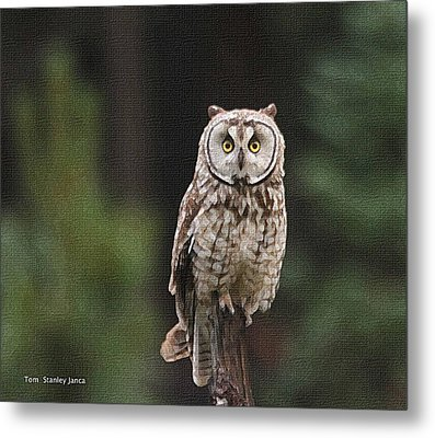 Metal Print featuring the photograph Owl In The Forest Visits by Tom Janca
